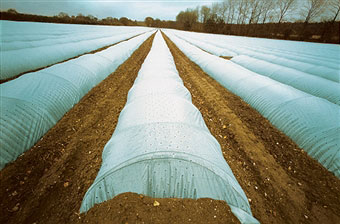 giant-poly-tunnels-in-field