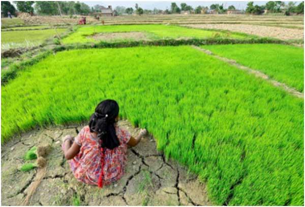 hydroponic-farming