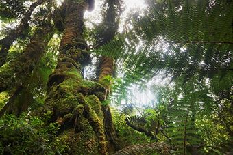 rainforests-source-of-medicine
